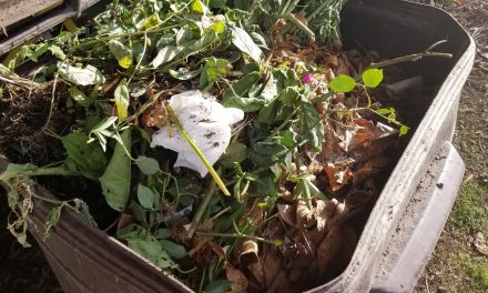 Composting: Backyard method