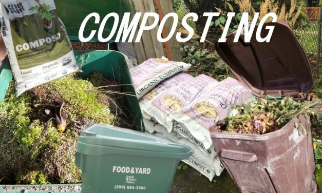 Curious about composting: Finding the right method