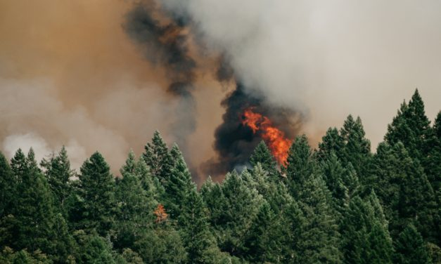 United Nations report urges us to act now on climate change: here's how in Washington State