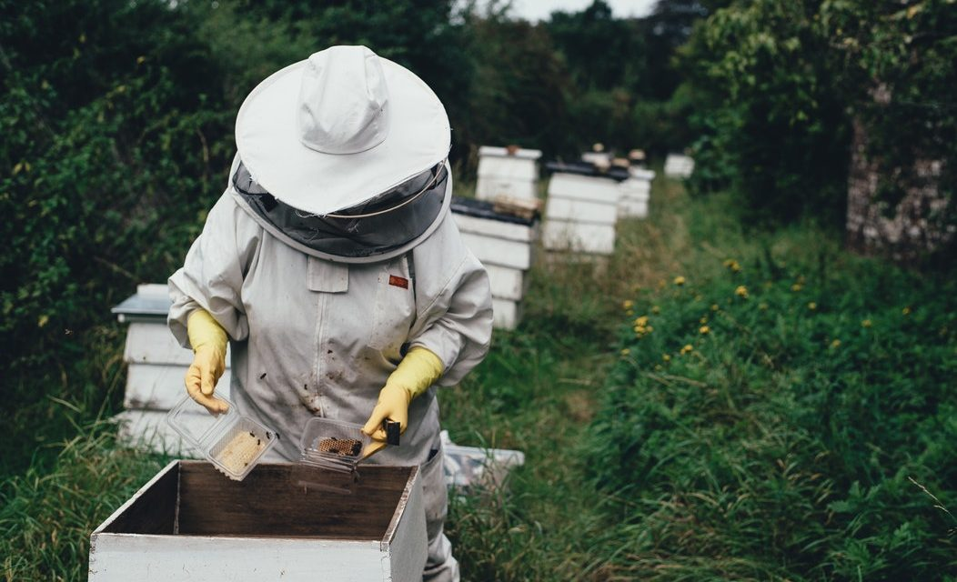 Bees are in danger: here's how you can help