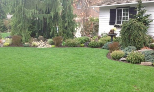 The do's and don'ts of natural fall lawn care