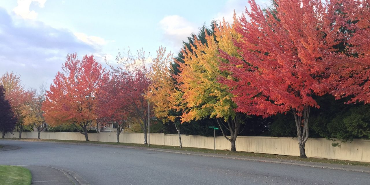 Tips for buying and planting trees in fall