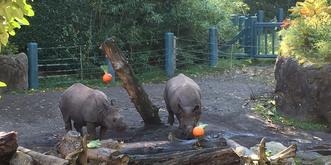 Palm Oil and Pumpkins take the Spotlight at Woodland Park Zoo